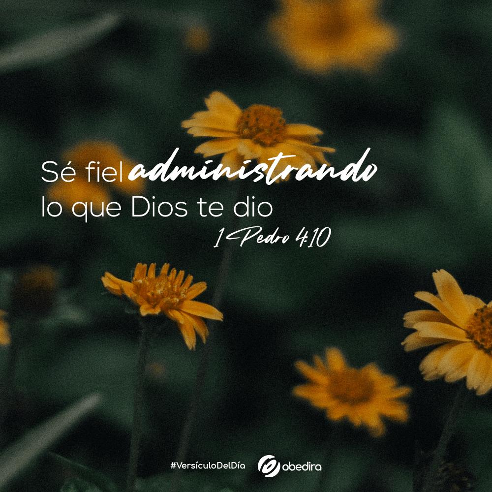 1 Pedro 4 10 Obedira
